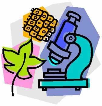 Microscope & cells