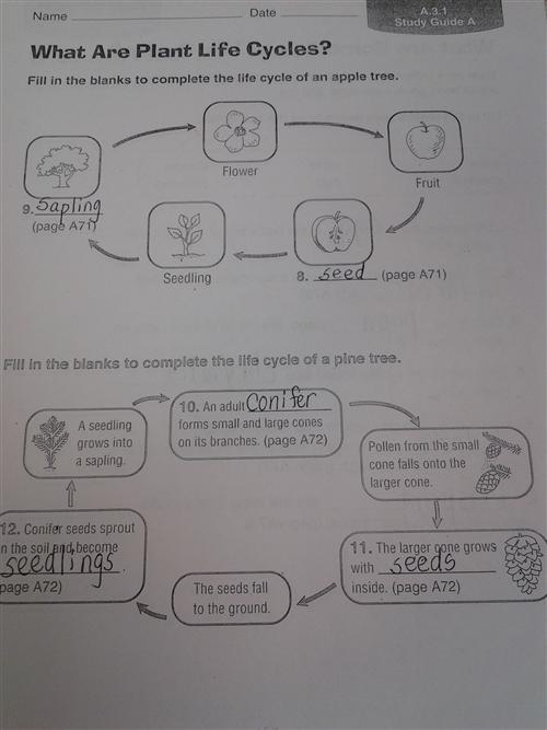 Zola  D  Plant Life Cycle Worksheet