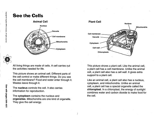 zola  d    cells